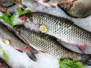 Свежемороженая северная рыба