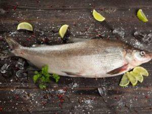 Муксун свежемороженый, Якутия, рыба оптом и в розницу
